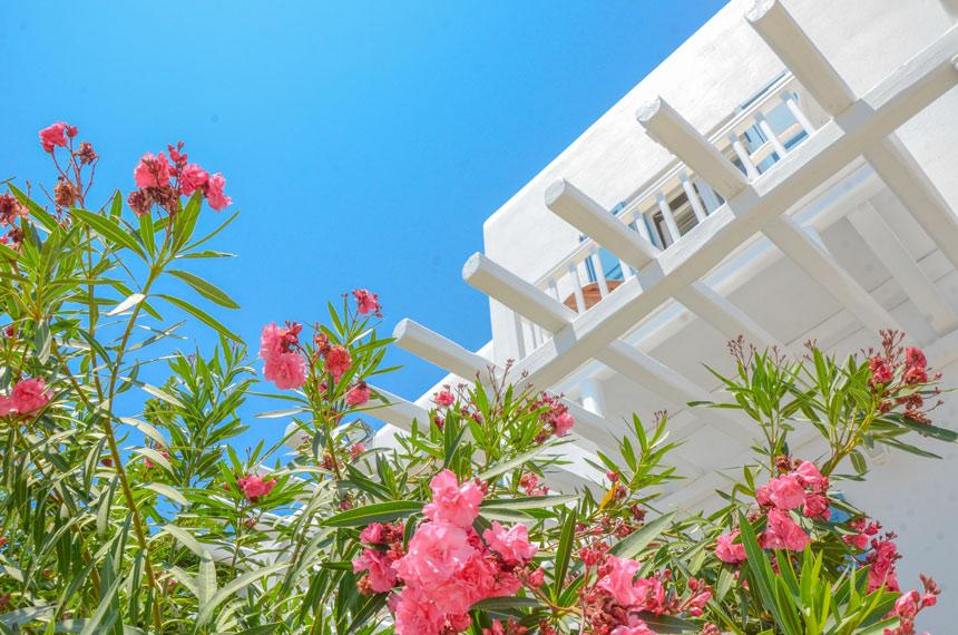 Petinaros Hotel extérieurs en fleur