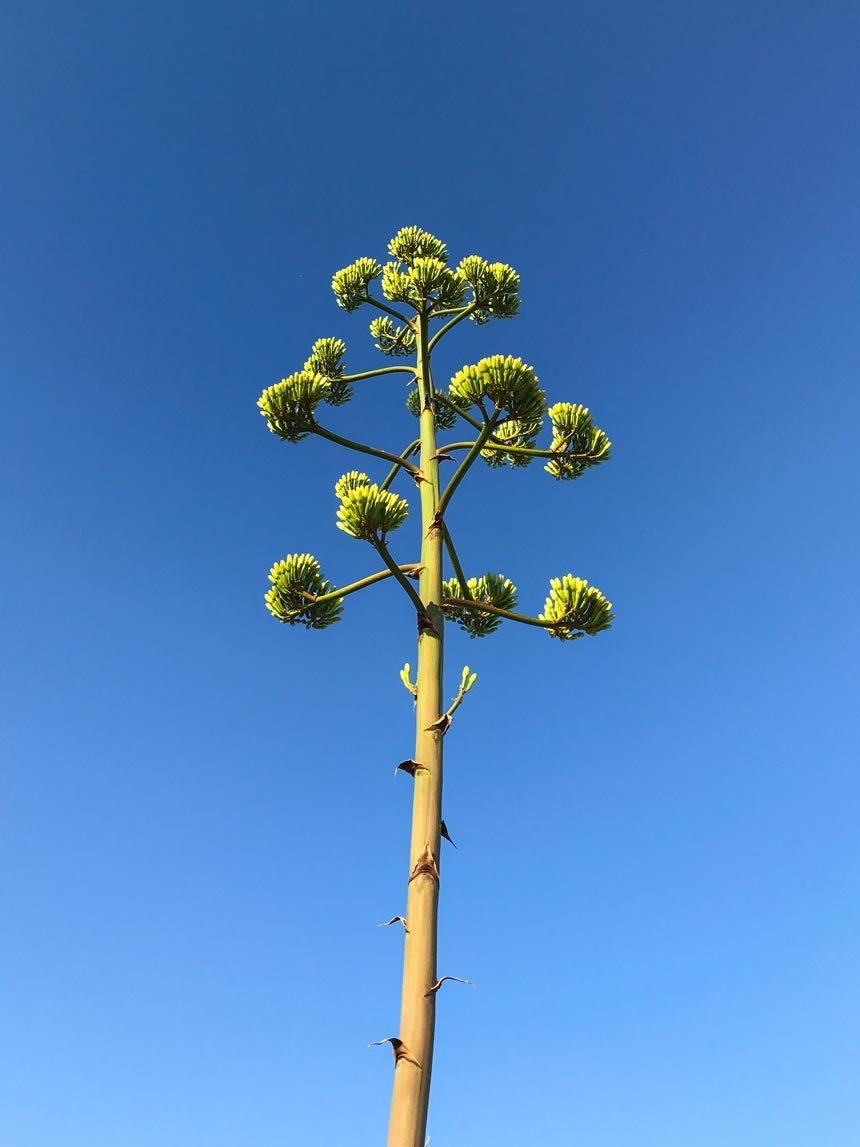 La végétation d'Antiparos